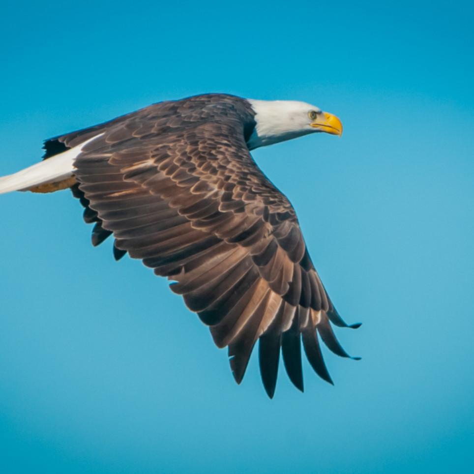 Eagle2 oc2r67