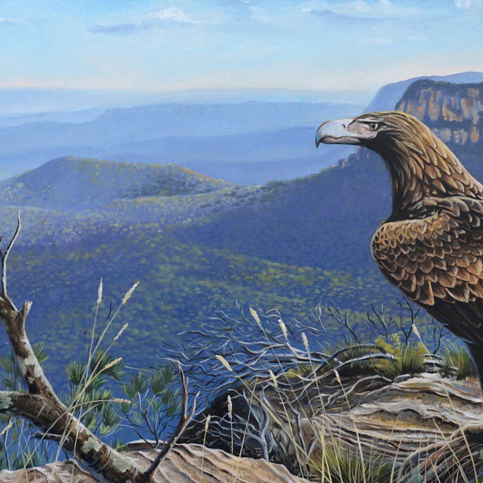 Wedgetail eagle before the descent socialmedia ixhk86
