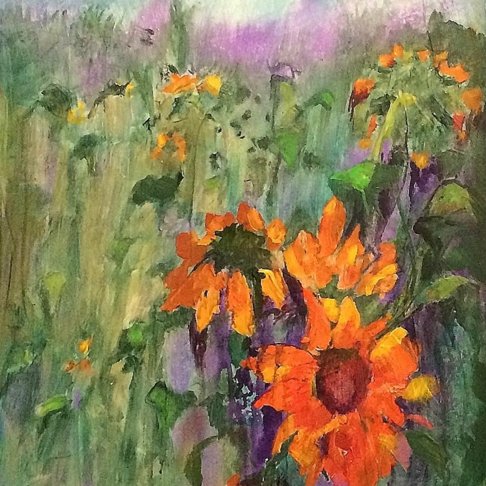 Rain drenched sunflowers p4gumm