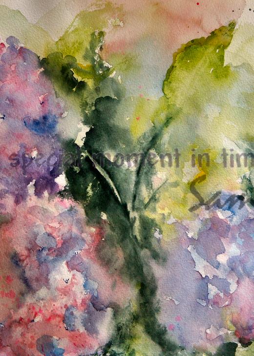 """""""Hydrangea in Bloom Art for Sale"""""""