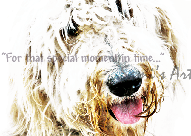 """Wallace the Goldendoodle Art for Sale"""