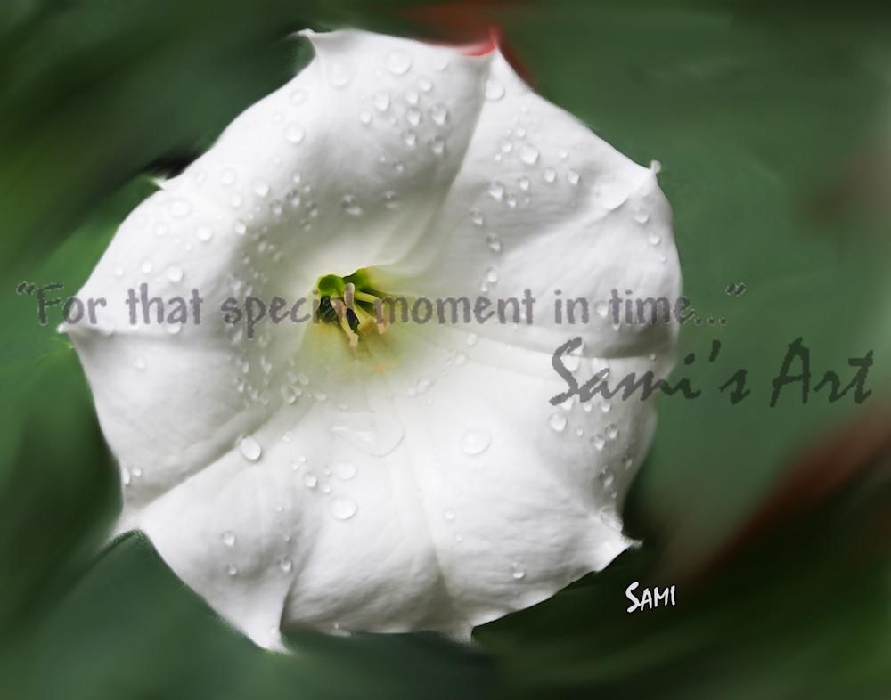 """Raindrops on a White Flower Photograph art for Sale as Fine Art"""