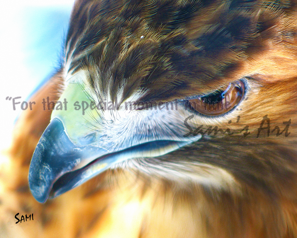 """""""Ostara the Red-Tailed Hawk Art for Sale"""""""