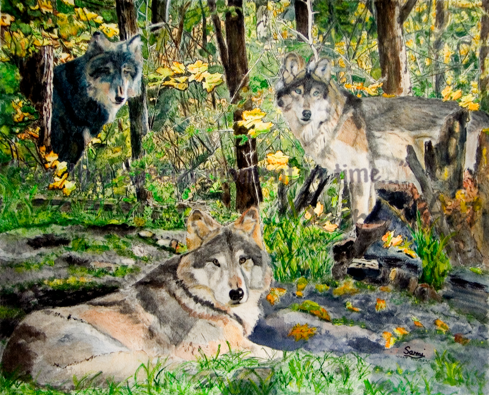 """Wolf Timbers Wolves Art for Sale"""