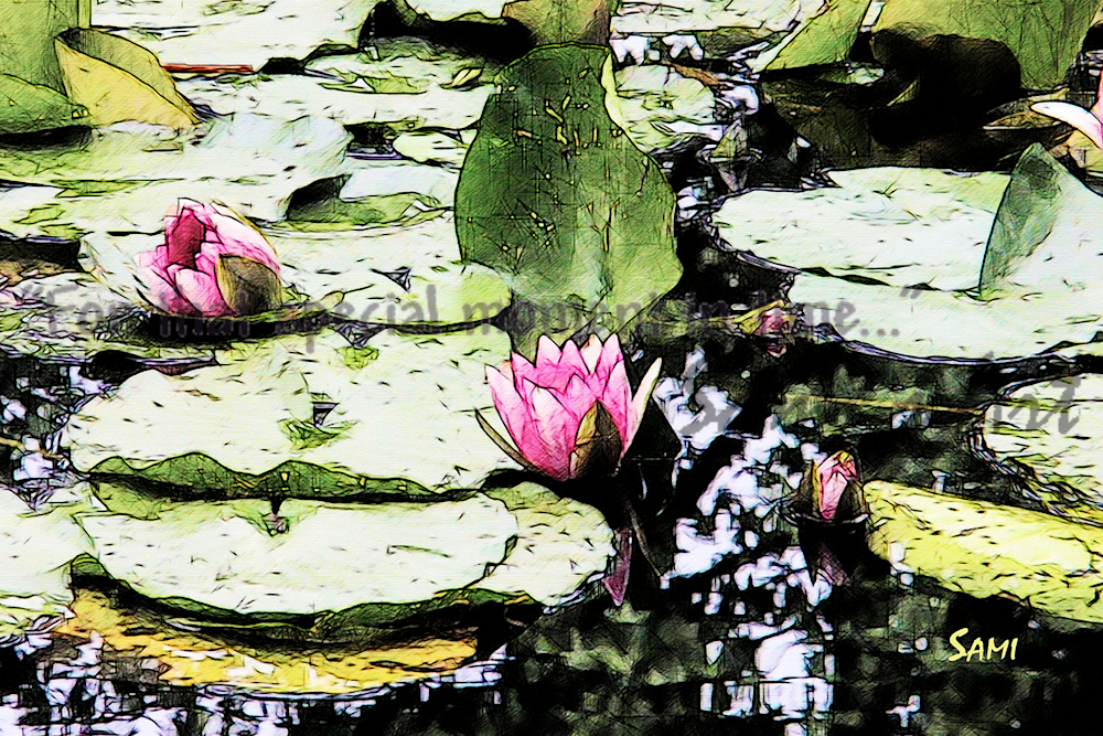 Water Lilies Art Photograph for Sale