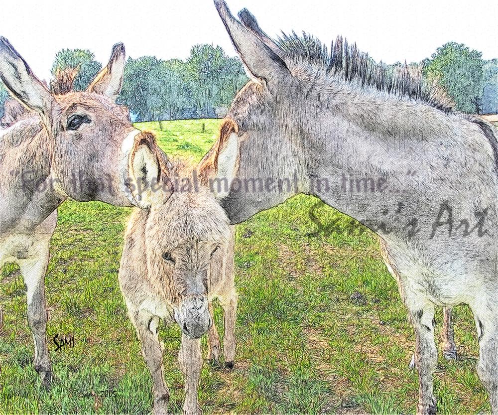 Miniature Donkey Family