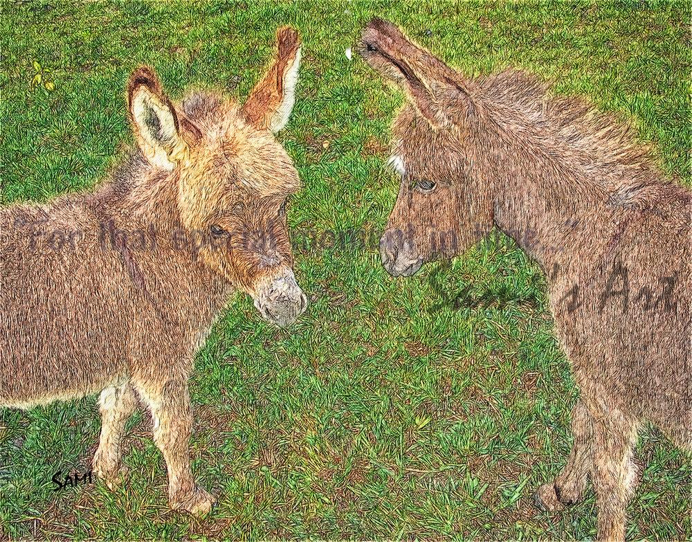 Miniature Donkey Babies Art for Sale