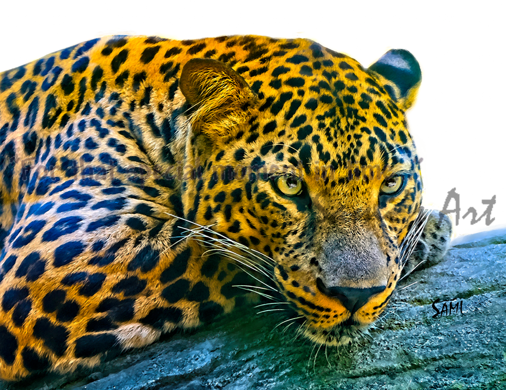 Leopard Wildlife Painting for Sale | Sami's Art Shop