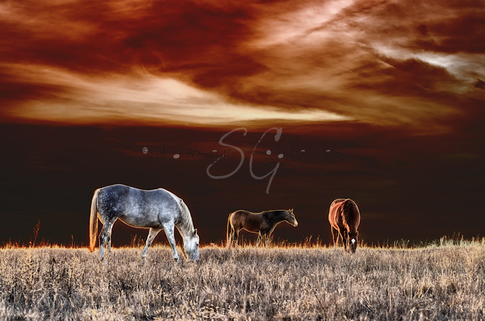 Horses, Abstract Horse Picture, Painted Ponies