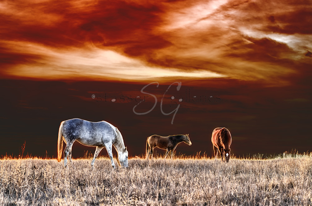 horses in a field in dark colors