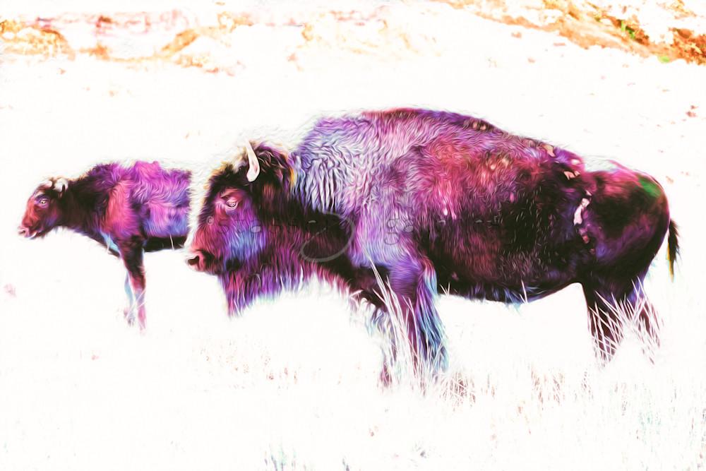 Purple-Buffalo-and-calf-photographic-art