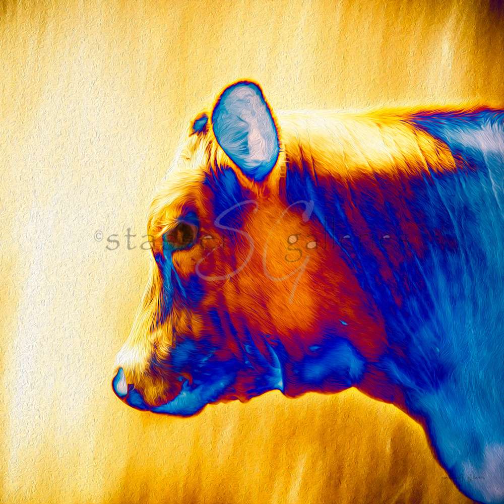 Light-Steer-Painted-photographic-art