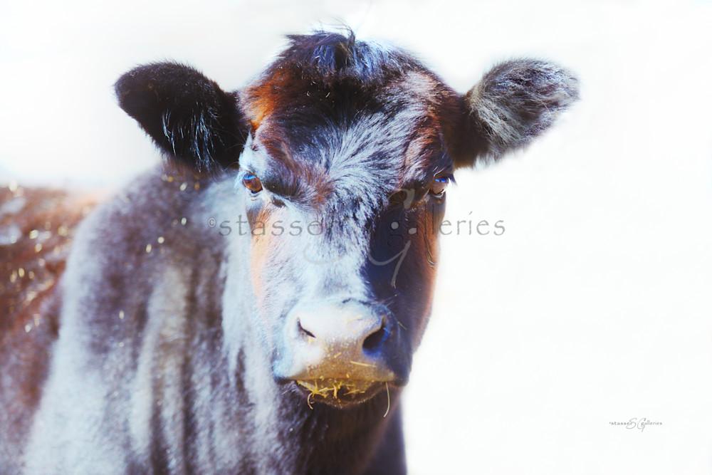 Annabelle, Cow-portrait