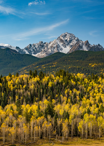 Buy Mt Sneffels Colorado Photography Prints & Strands of Aspen Trees in Fall