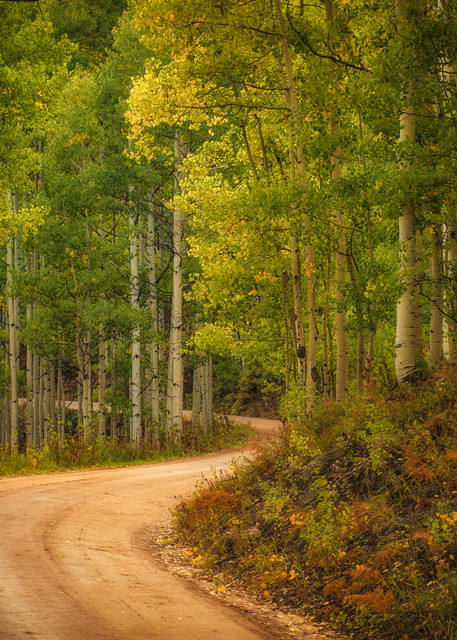 Fall Colors of Aspen Trees Lined Colorado Country Road Crested Butte
