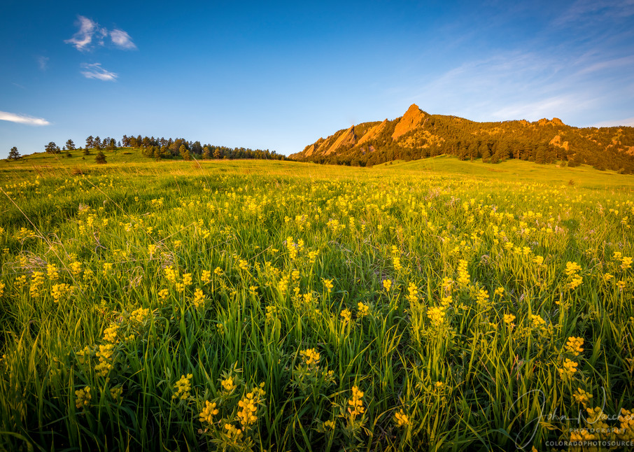 Photography of Boulder Colorado Flatirons with Spring Wildflowers