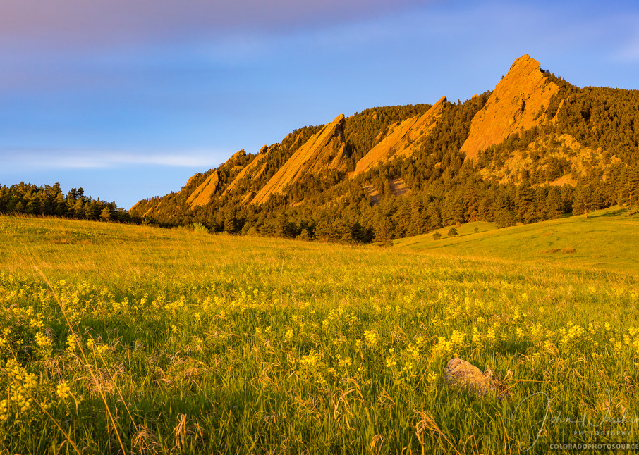 Photo of Boulder Flatirons Sunrise Field of Golden Banner Wildflowers