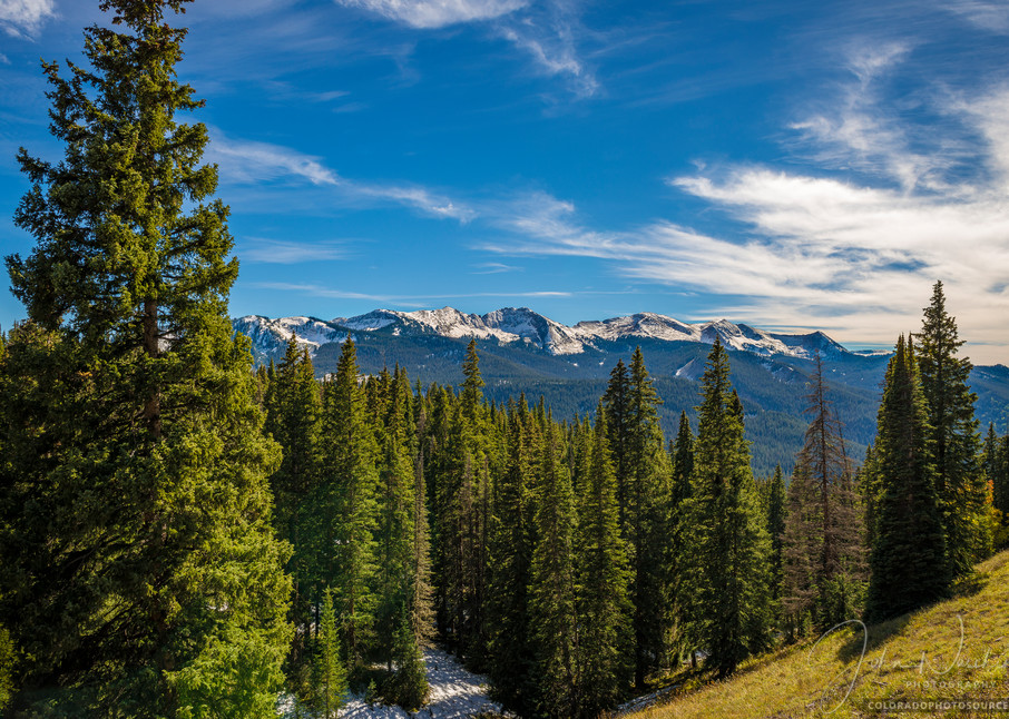 Picture of West Elk Mountains Framed by Colorado Pine Trees