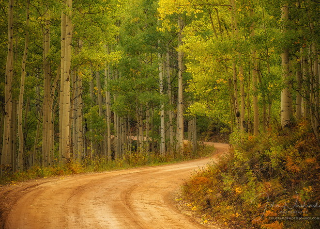 Colorado Photography Prints of Aspen Tree Lined Country Road in Fall