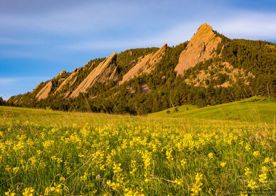 Photo of Boulder Colorado Flatiron Mountains, Yellow Wildflowers