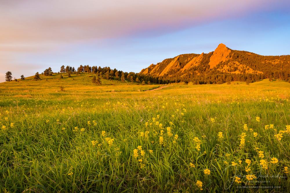 Photograph of Boulder Colorado Flatirons & Golden Banner Wildflowers