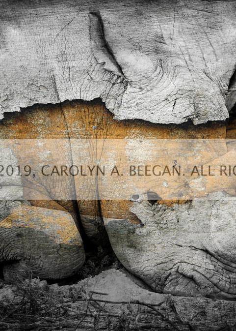 Rhino No. 1, Print, 2018 by artist Carolyn A. Beegan