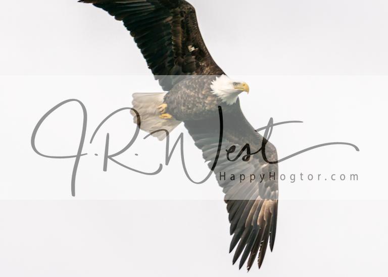 Vertical Climb Photography Art   Happy Hogtor Photography