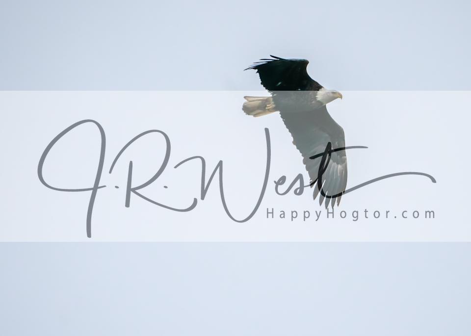 Bird's Eye View Photography Art | Happy Hogtor Photography