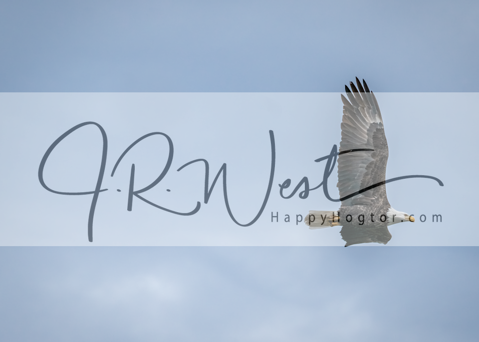 Feathers Flying Photography Art | Happy Hogtor Photography