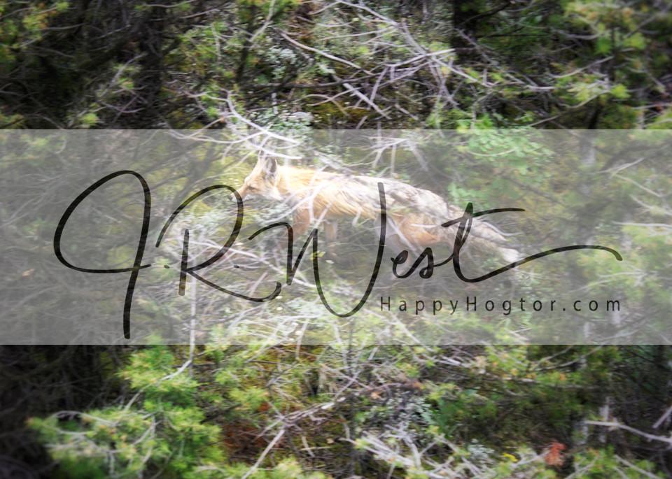 fox-in-the-woods