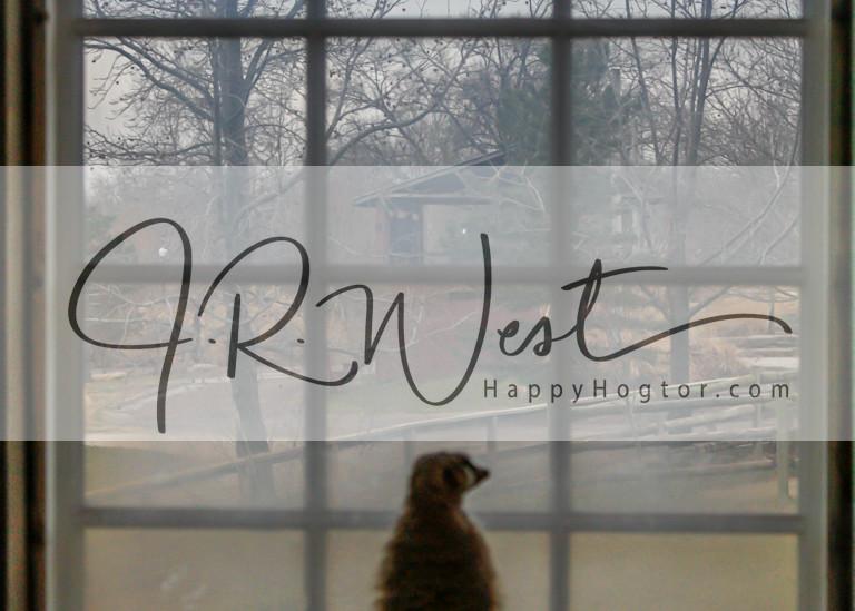 meerkat-at-the-window