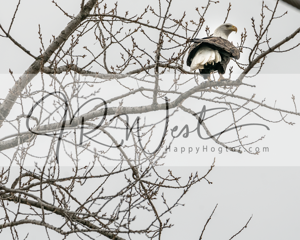 Watching Photography Art | Happy Hogtor Photography