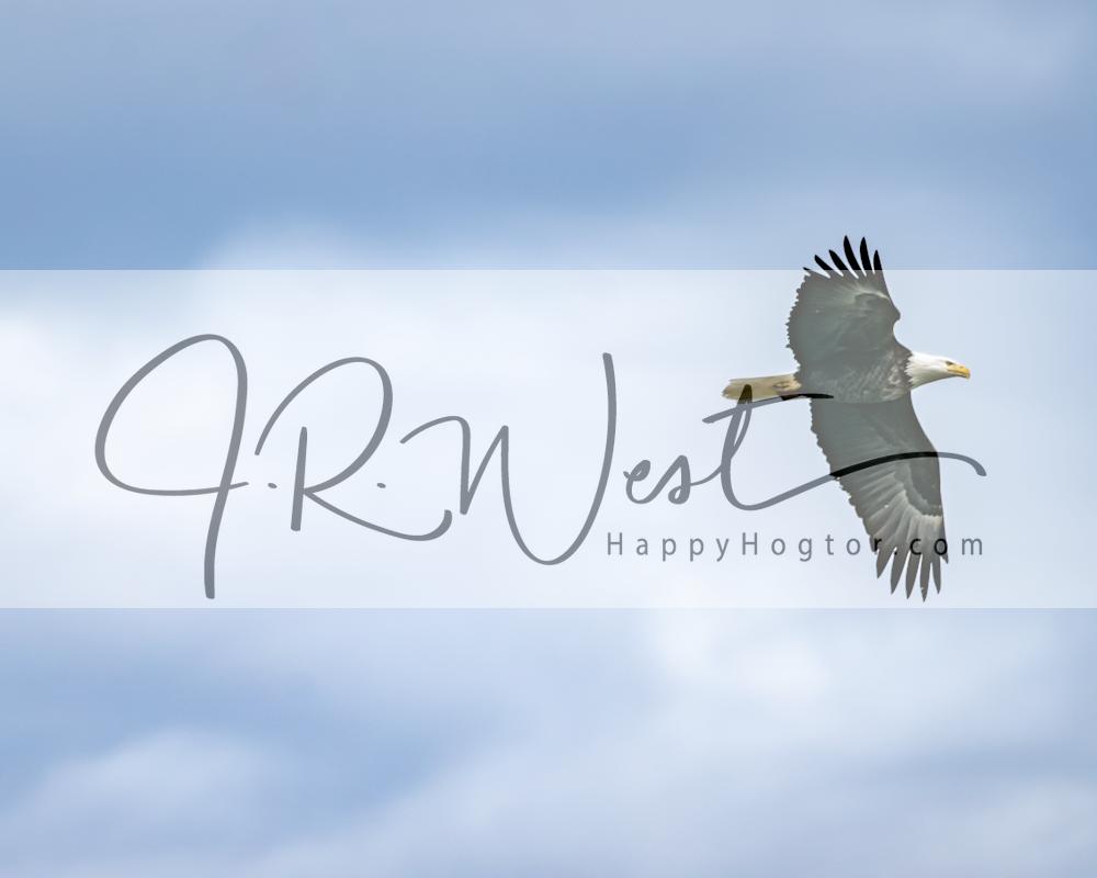 Flying Through Blue Skies Photography Art   Happy Hogtor Photography