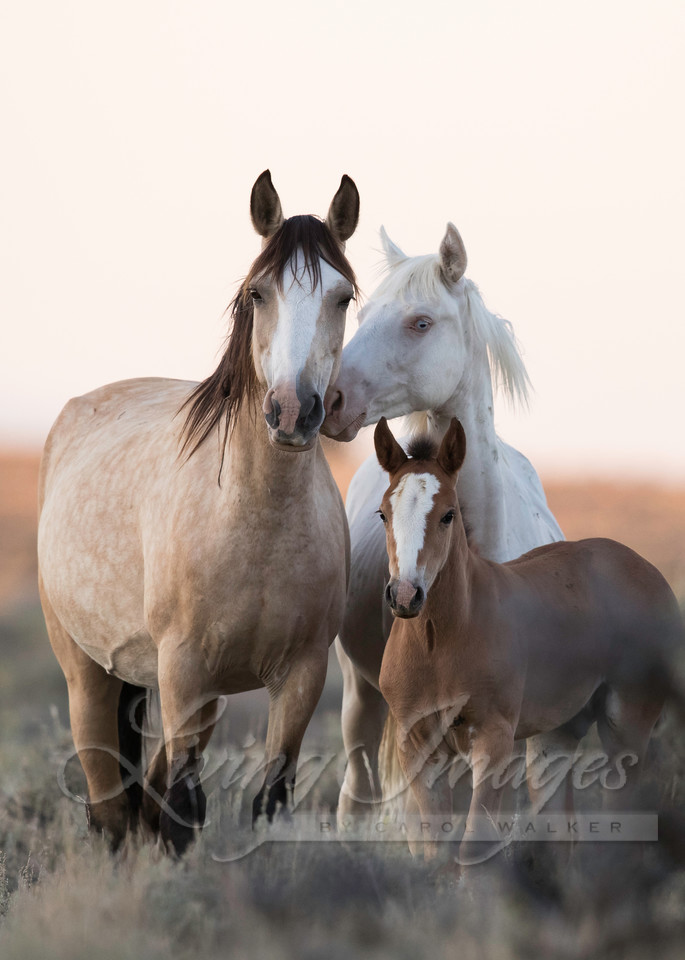 Wild Horse Family Art | Living Images by Carol Walker, LLC