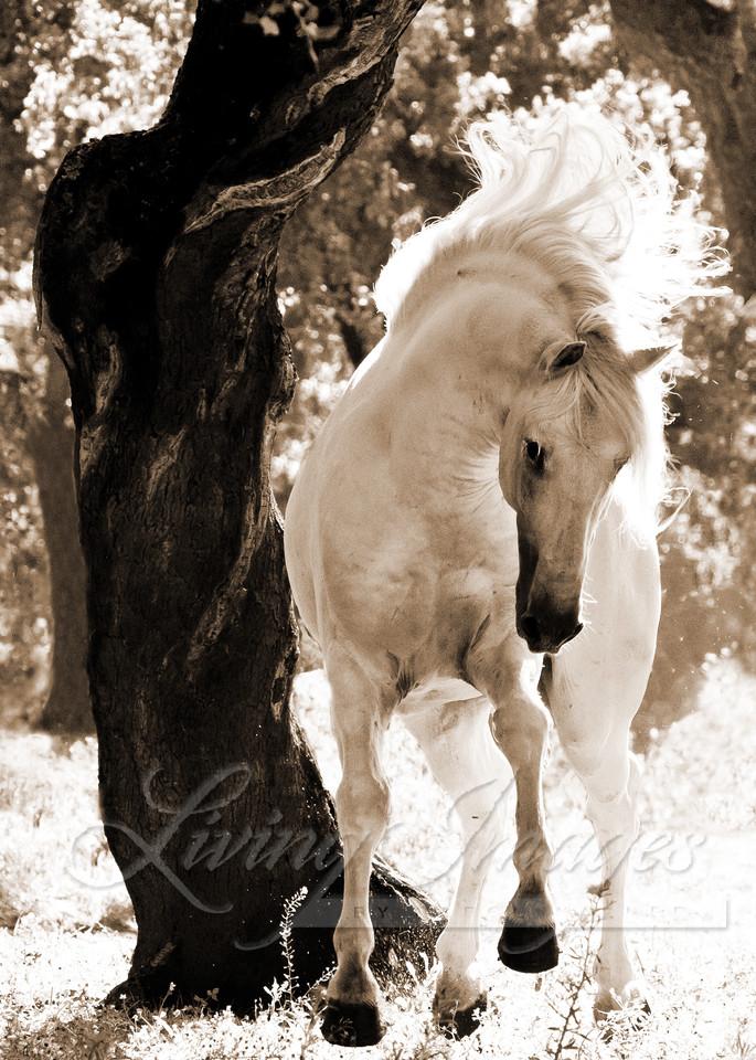 Stallion Dances Ii Art   Living Images by Carol Walker, LLC
