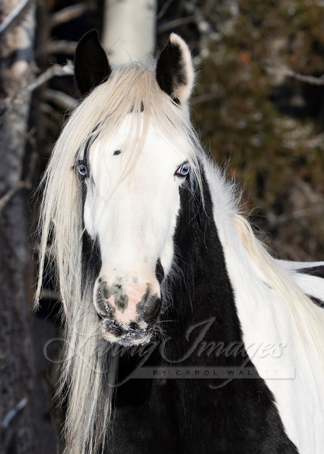Gypsy In The Forest Ii Art | Living Images by Carol Walker, LLC