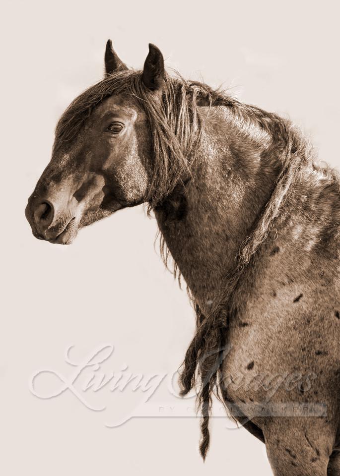 Red Desert Wild Art | Living Images by Carol Walker, LLC