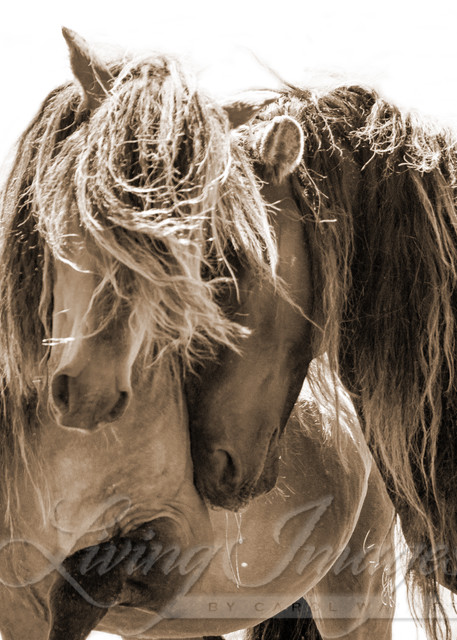 Two Sable Island Stallions Sepia Iii Art | Living Images by Carol Walker, LLC