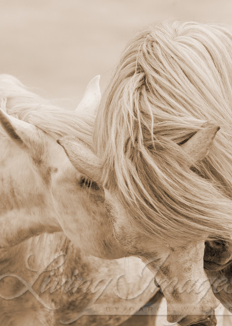 Two Camargue Horses Together In Sepia Art | Living Images by Carol Walker, LLC