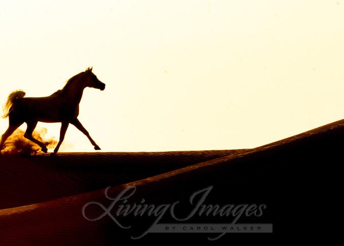 Desert Stallion Runs Across The Dunes Ii Art | Living Images by Carol Walker, LLC
