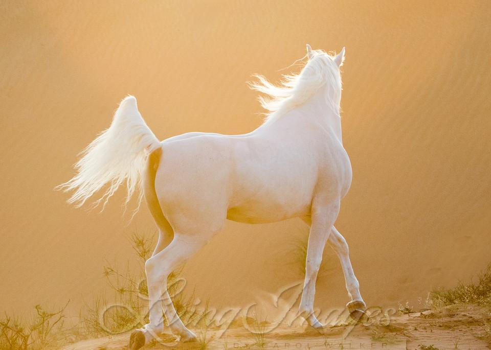 Desert Stallion At Sunset Art | Living Images by Carol Walker, LLC