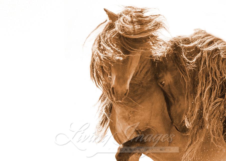 Two Sable Island Stallions Vi Sepia Ii Art   Living Images by Carol Walker, LLC