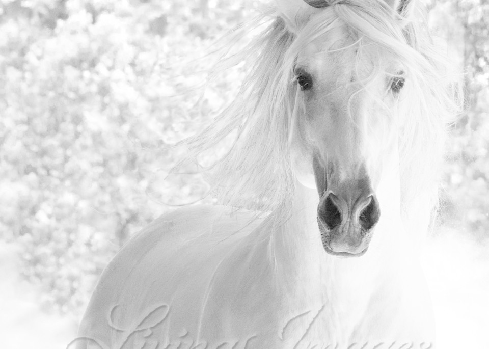 White Stallion Runs In The Dust Art | Living Images by Carol Walker, LLC
