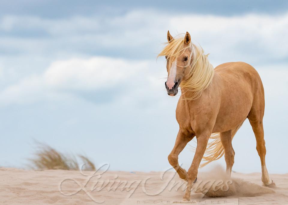 Palomino Stallion In The Dunes Ii Art | Living Images by Carol Walker, LLC