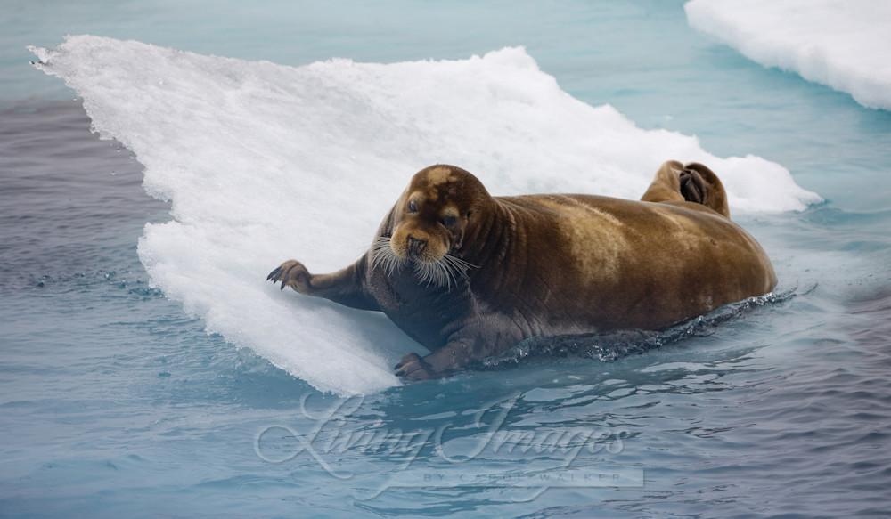 Seal's Slide Art | Living Images by Carol Walker, LLC