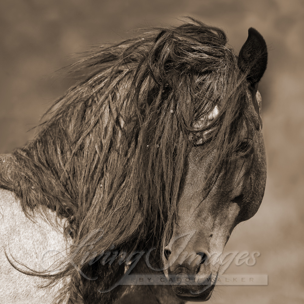 Freedom Comes Close In Sepia Art | Living Images by Carol Walker, LLC