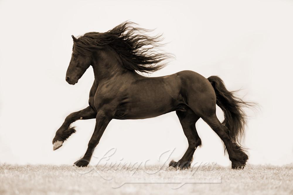 Friesian Stallion's Gallop In Sepia Art | Living Images by Carol Walker, LLC