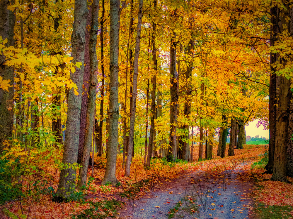 Fall Colors Driveway Photography Art | FocusPro Services, Inc.
