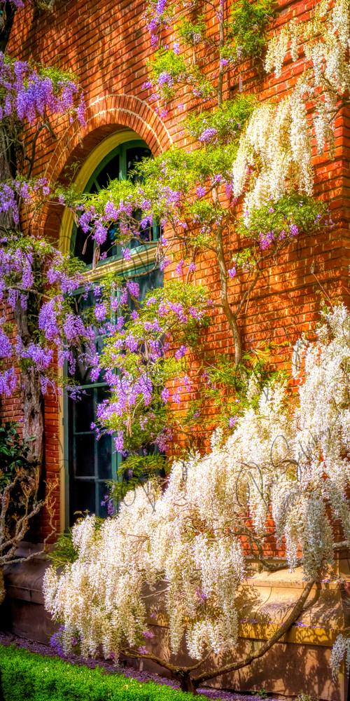 Filoli Gardens Photography Art   FocusPro Services, Inc.