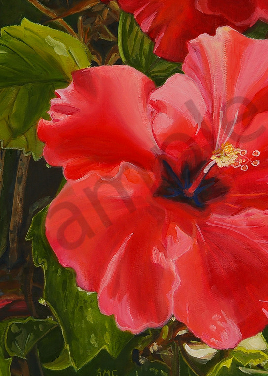 Nature Art   Red Hibiscus by Carlisle